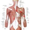 筋膜を利用して痛みを改善する