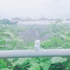 梅雨明け前にブロンディールでエナジーチャージ!!