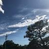 夏、青空とくると思い出す作品のお話です。