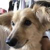 皮膚の弱い犬に「ミネラルスパシャンプー」体験談