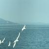 佐柳島から多度津港へ、たくさんのカモメ、JR在来線で高松へ、JR特急「うずしお」で徳島