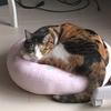 【愛猫日記】毎日アンヌさん#54