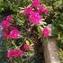 新しいお花見つけた!