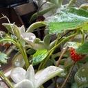 プランター菜園ブログ