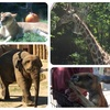 1歳2ヶ月のおでかけ 東山動植物園に行ってきました