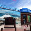 Two Oceans Aquariumのケープペンギン in ケープタウン