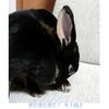 ウサギがう●ちを食べちゃう件について