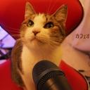 カフェオ猫と15の椅子 LIVE SCHEDULE