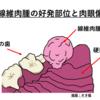 気をつけてあげて!『犬猫の口腔内腫瘍①』
