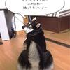 春の兆し〜抜毛祭り〜