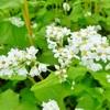 【福島絶景№48】猿楽台地。そばの花畑の見ごろはいつ頃? 一面真っ白な花畑へ大人女子のドライブ旅