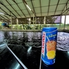 【マレーシアでエビ釣り】クアラルンプール Kolam Pancing Udang Galah RIINFA Hulu Langatでオニテナガエビを釣る。 値段・行き方まとめ