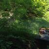 長野県の自然が想像以上に豊かで最高の避暑地だった話