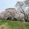 御朱印集め 休日の過ごし方24(桜)