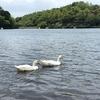 【別府】九州の湖畔キャンプは志高湖キャンプ場で決まり!