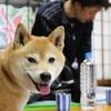 犬の整体・マッサージ教室ご参加ありがとうございました!