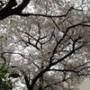 勝俣部長の「ため息」3663回・・・・自己強制