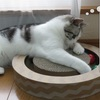 猫の道具 すずめのおもちゃ ~ニャンコロビ~