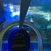 水族館といえば、やっぱり魚津水族館!