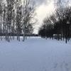 前田森林公園【札幌の雪遊びスポット】無料の雪山でスキーの練習!