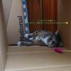 3-155   グレコ家猫日記〜グレコだって、ごく普通の猫です〜