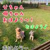犬連れ旅行 ~白馬2日目~