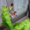 ホトトギスの花に、フライパン・パエリア。