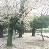 雨上がり、桜の精霊とのお話