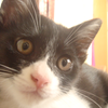 今日の黒猫モモ&白黒猫ナナの動画ー497