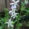 二つの花:春の雑草から