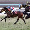 2019京都記念(G2) コース傾向、人気馬ジャッジ(追い切り等)