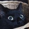 物理学者が、猫が液体か固体かに分類されるべきかどうかに関する研究でイグ・ノーベル賞を受賞