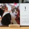 ウチ猫のカレンダー、作ってみました。