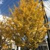 木々が告げる秋冬に「サラメシ」見て味わう落花生味噌