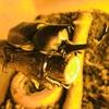 カブトムシの飼育【昆虫採集に適した時期】は7月下旬から8月上旬が良い