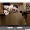 動画ファイルを無劣化で高速カット編集ができる「LosslessCut」