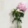 お花(^^♪