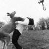 【動画】衝撃!カンガルーにパンチを浴びせた男性とその背景の物語とは?