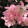 コロナ禍の桜