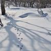 雪の林の中を歩くとき