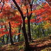 週末風景(紅葉とカワセミ)