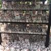 【豪徳寺】たくさんの招福猫児(招き猫)が出迎えてくれる「招猫殿」の奉納所は圧巻だった!
