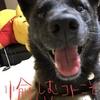 甲斐犬サンとアタクシの愉しみ方。の巻〜ワク(灬ºωº灬)テカ♬