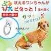 犬の躾でお悩みの方は ブルピタ の効果をお試しください!