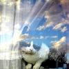 地球ネコとつながる初夏の窓