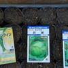 春物育苗開始