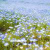 4/29 春のからだこころフェスタ  〜アレクサンダーテクニークを使ったより良い日常のすごし方〜