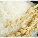魚沼産コシヒカリは美味しいお米
