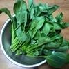 師匠の小松菜
