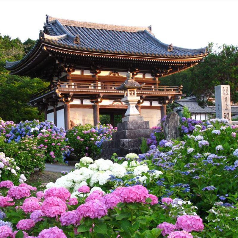 「あじさい寺」丹州観音寺へ古寺探訪〜福知山で話題の展望台へ〜